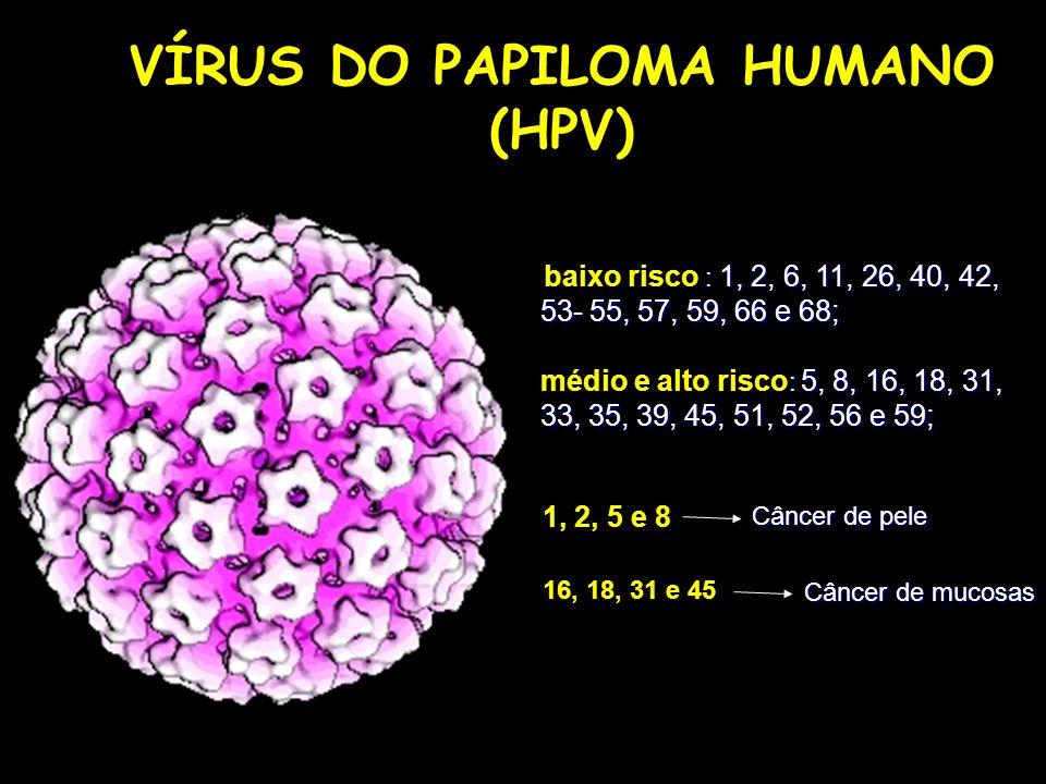 VÍRUS DO PAPILOMA HUMANO (HPV)