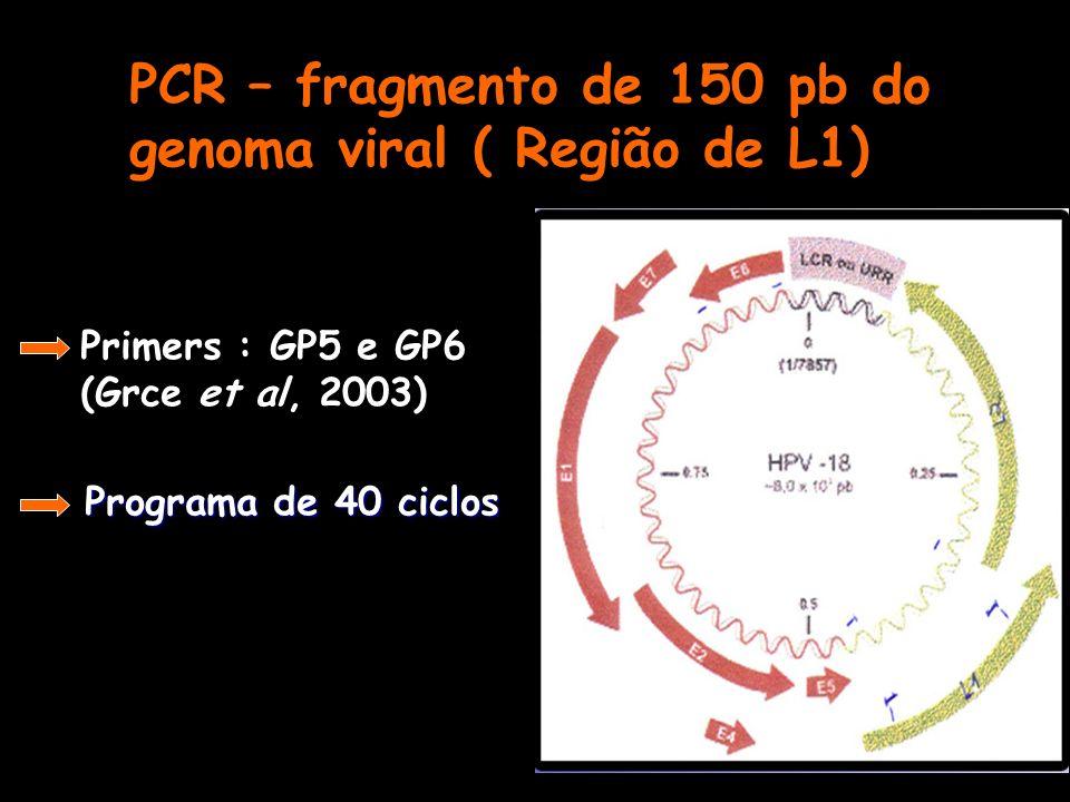 PCR – fragmento de 150 pb do genoma viral ( Região de L1)
