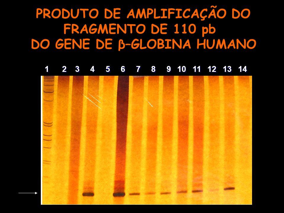 PRODUTO DE AMPLIFICAÇÃO DO FRAGMENTO DE 110 pb