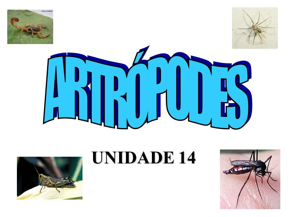 ARTRÓPODES UNIDADE 14