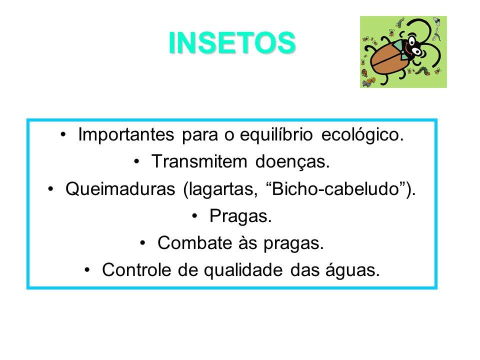 INSETOS Importantes para o equilíbrio ecológico. Transmitem doenças.