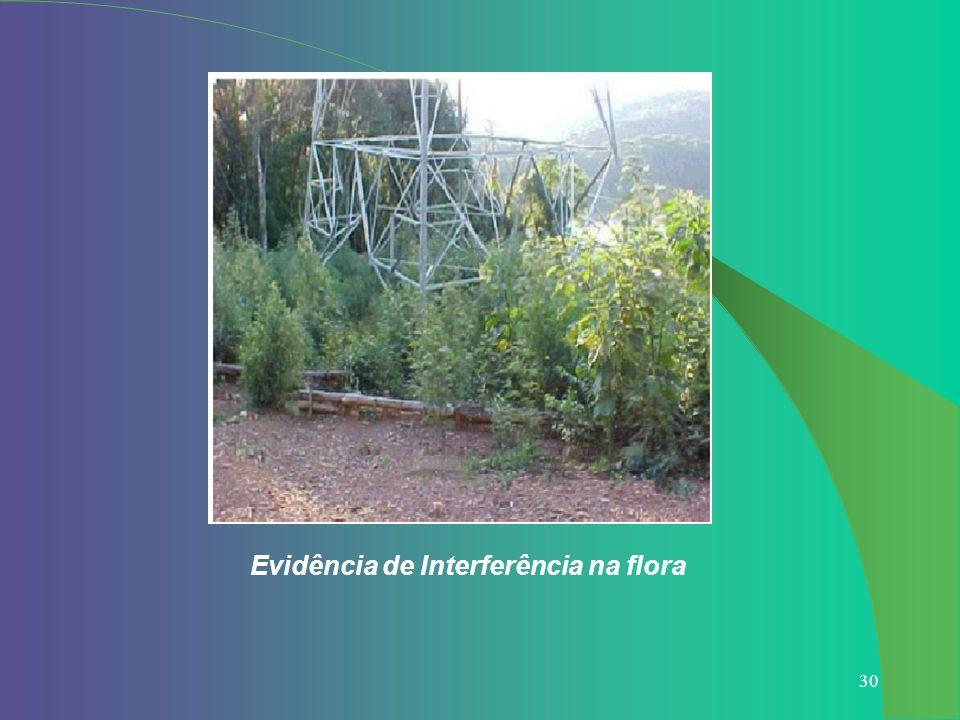 Evidência de Interferência na flora