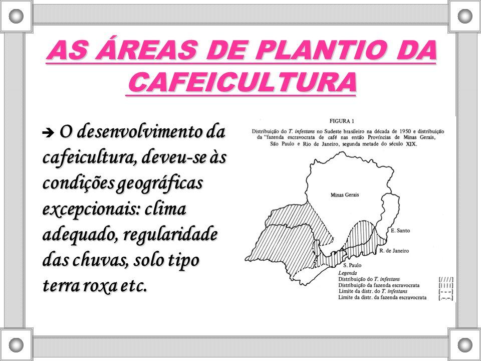 AS ÁREAS DE PLANTIO DA CAFEICULTURA