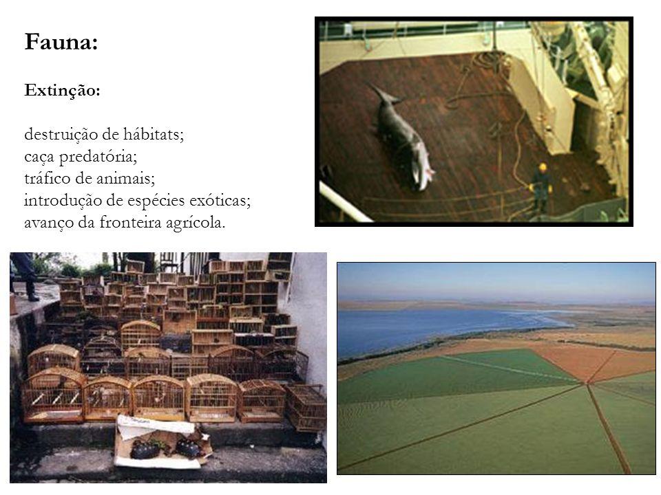Fauna: Extinção: destruição de hábitats; caça predatória;