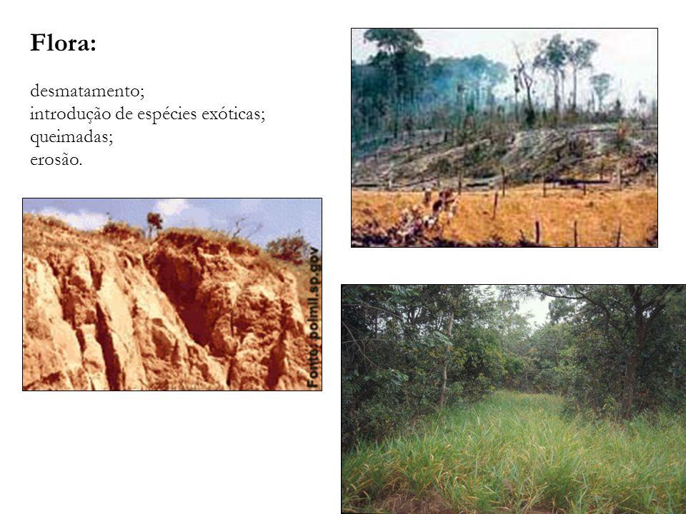 Flora: desmatamento; introdução de espécies exóticas; queimadas;