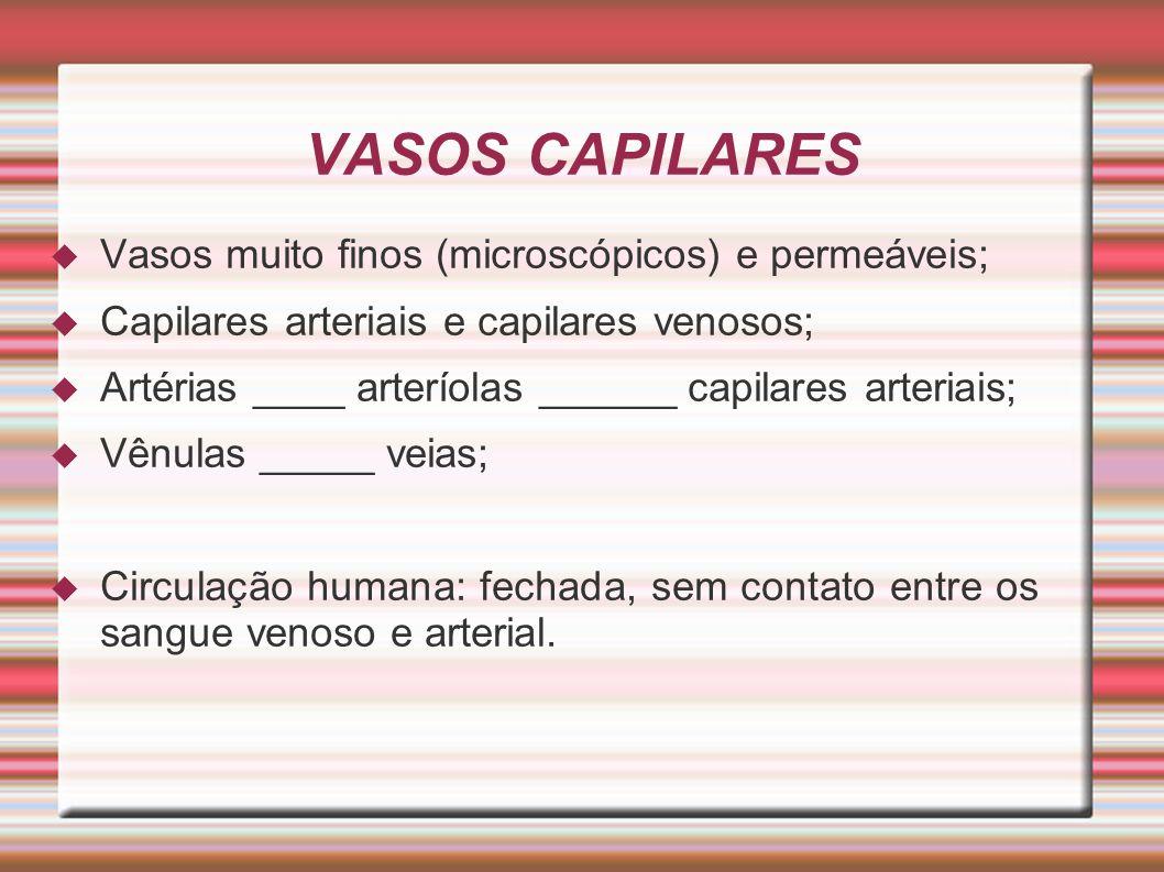 VASOS CAPILARES Vasos muito finos (microscópicos) e permeáveis;