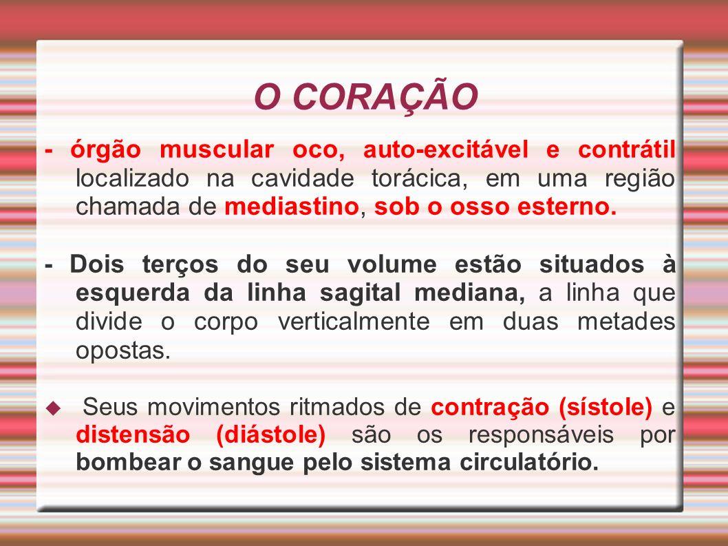 O CORAÇÃO - órgão muscular oco, auto-excitável e contrátil localizado na cavidade torácica, em uma região chamada de mediastino, sob o osso esterno.