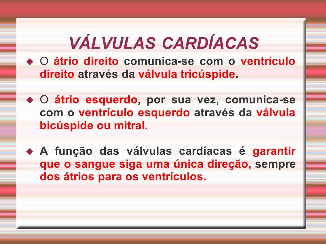 VÁLVULAS CARDÍACAS O átrio direito comunica-se com o ventrículo direito através da válvula tricúspide.