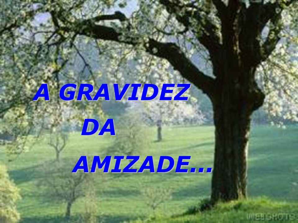 A GRAVIDEZ DA AMIZADE... Autor Desconhecido