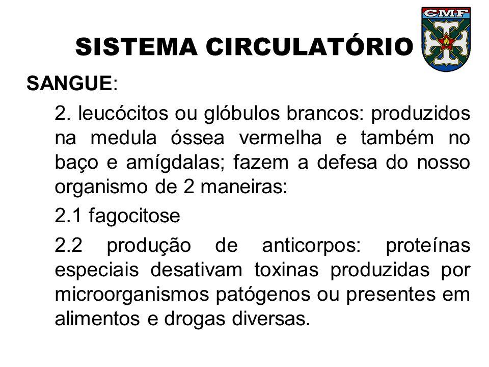 SISTEMA CIRCULATÓRIO SANGUE: