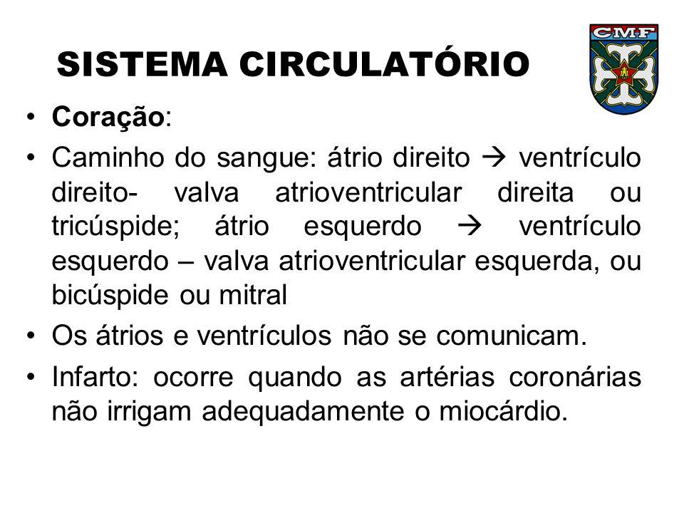 SISTEMA CIRCULATÓRIO Coração: