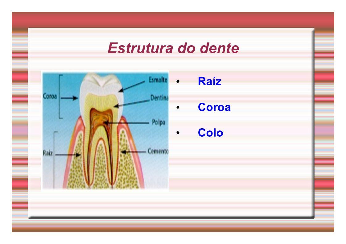 Estrutura do dente Raíz Coroa Colo