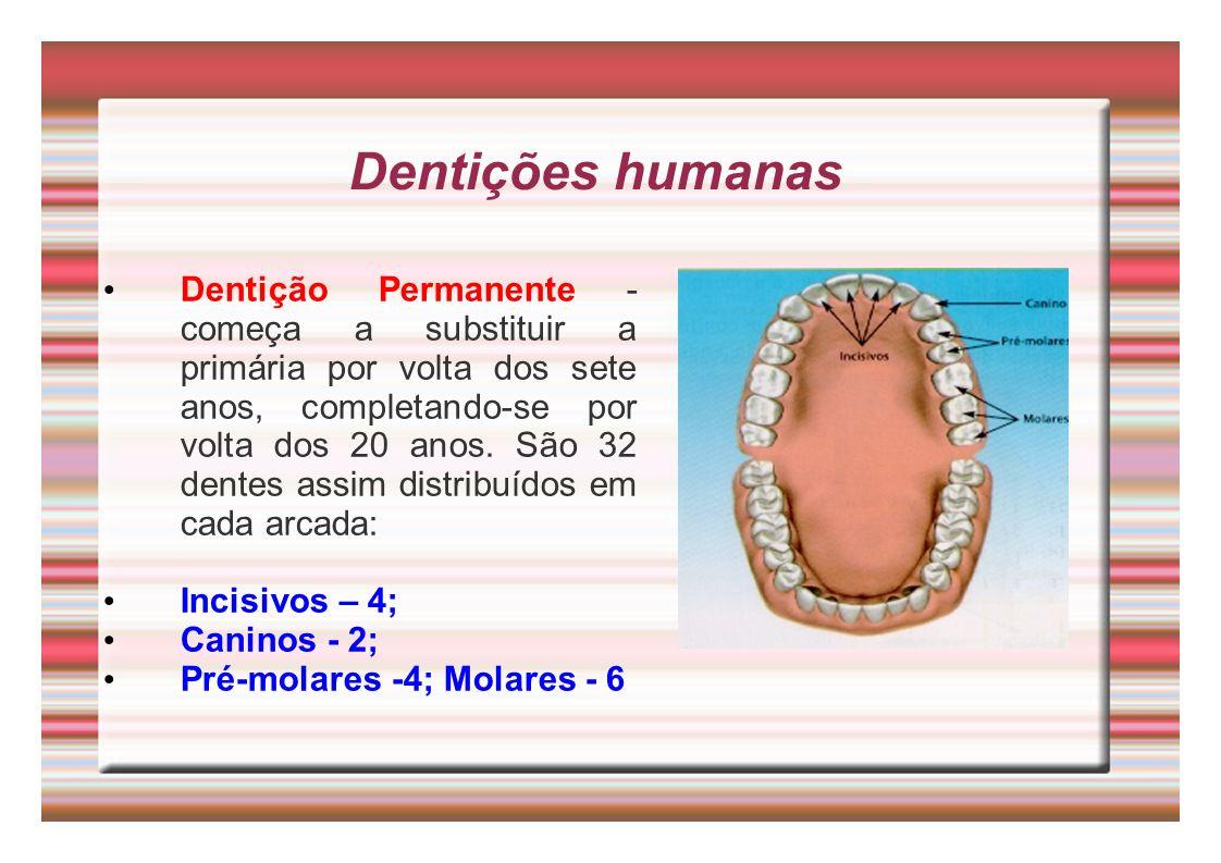 Dentições humanas