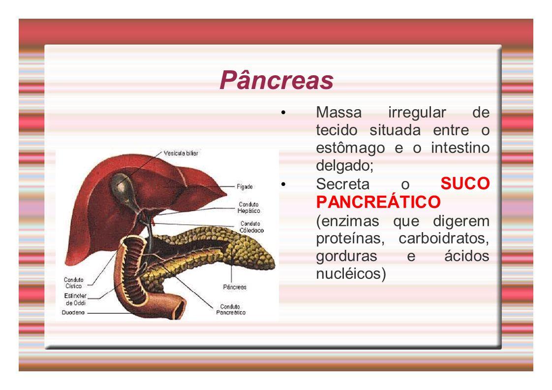 Pâncreas Massa irregular de tecido situada entre o estômago e o intestino delgado;