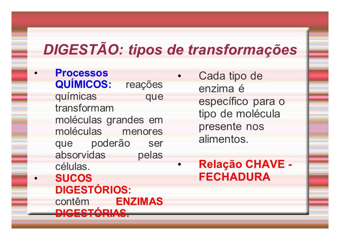 DIGESTÃO: tipos de transformações