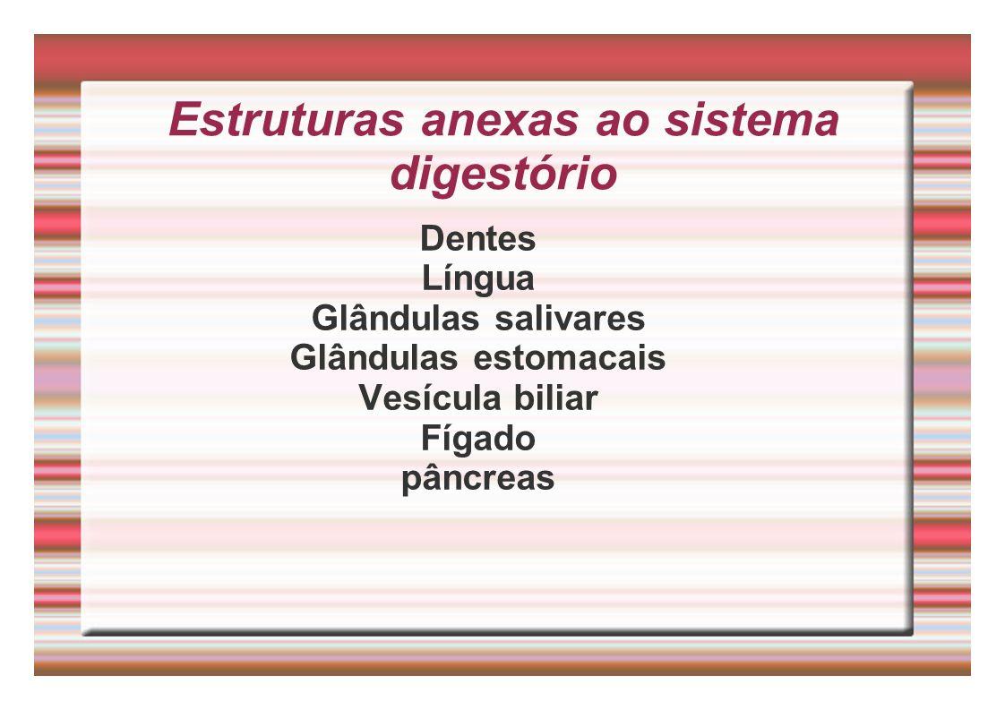 Estruturas anexas ao sistema digestório