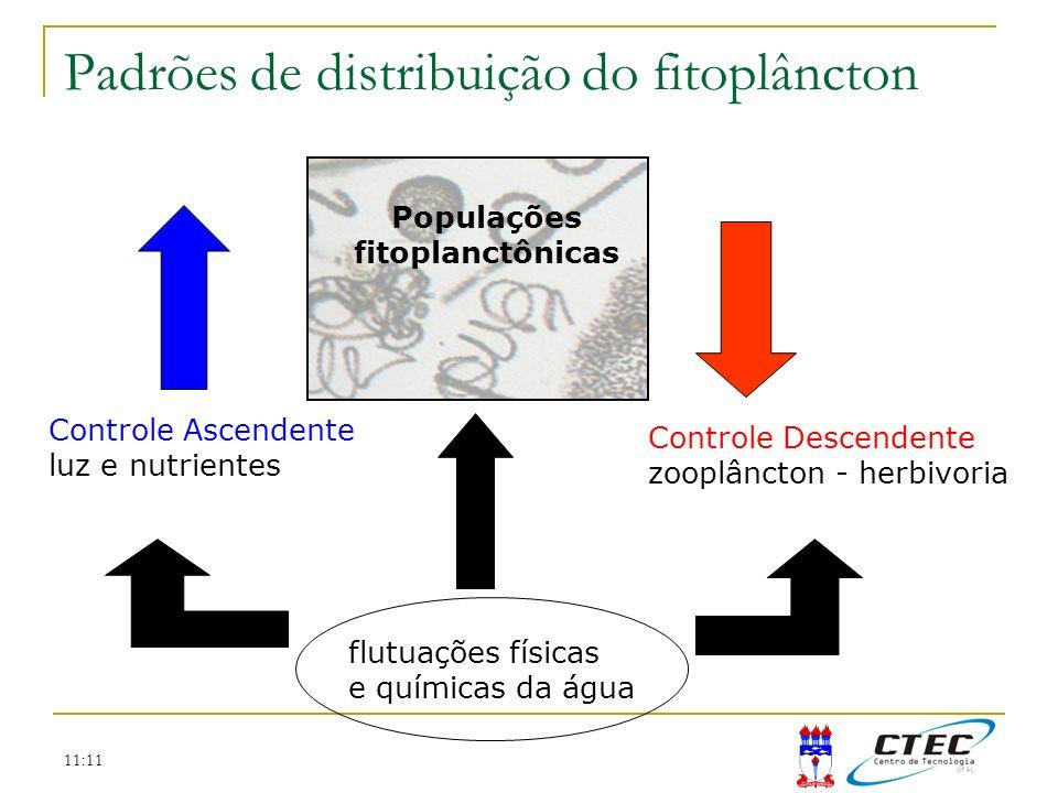 Padrões de distribuição do fitoplâncton