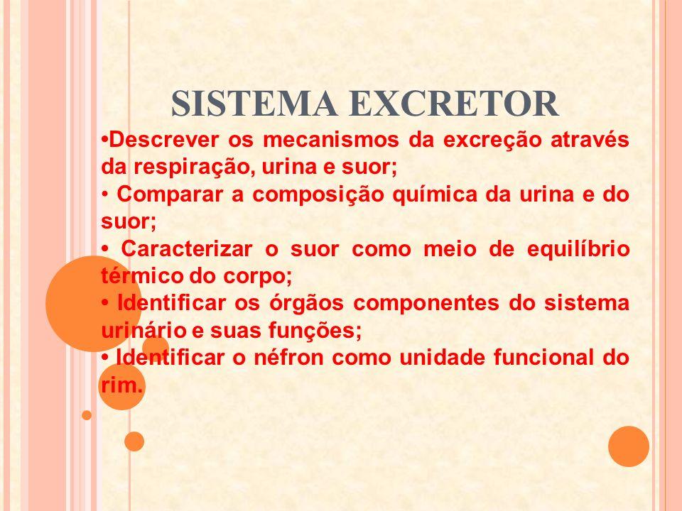 SISTEMA EXCRETOR Colégio militar de fortaleza 8º ano