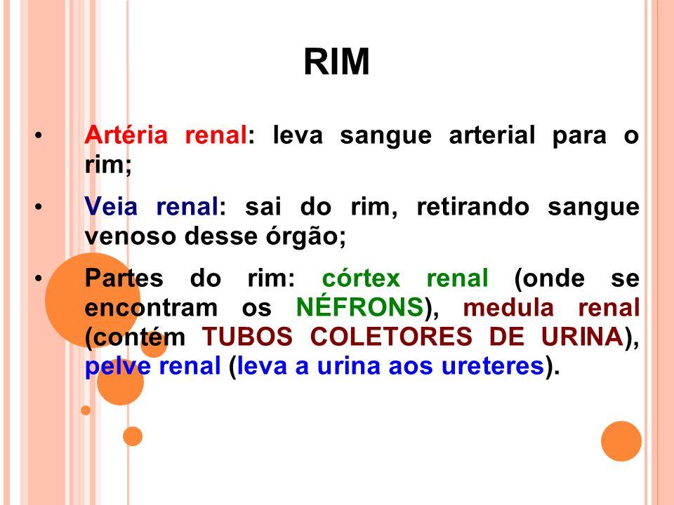 RIM Artéria renal: leva sangue arterial para o rim;