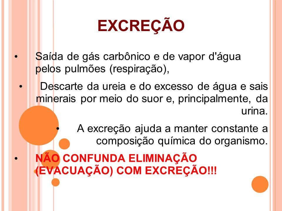 EXCREÇÃO Saída de gás carbônico e de vapor d água pelos pulmões (respiração),