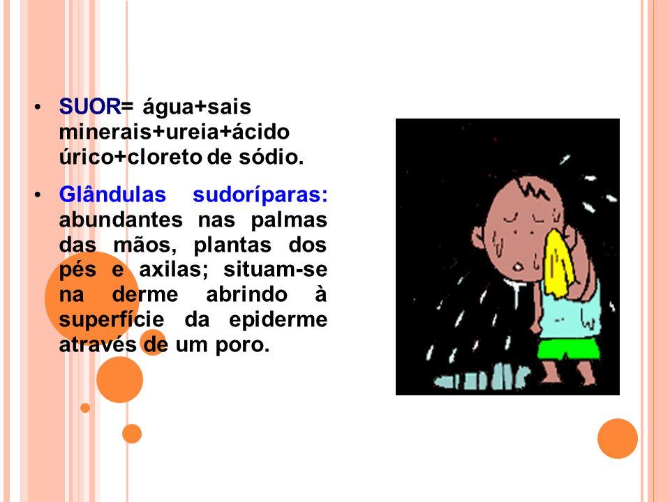 SUOR= água+sais minerais+ureia+ácido úrico+cloreto de sódio.