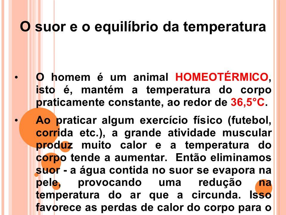 O suor e o equilíbrio da temperatura