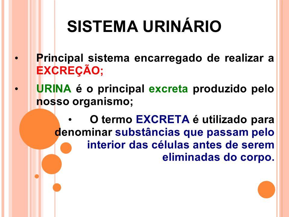 SISTEMA URINÁRIO Principal sistema encarregado de realizar a EXCREÇÃO;