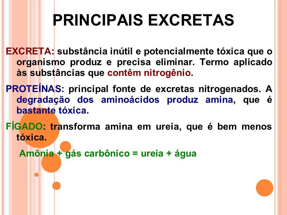 PRINCIPAIS EXCRETAS