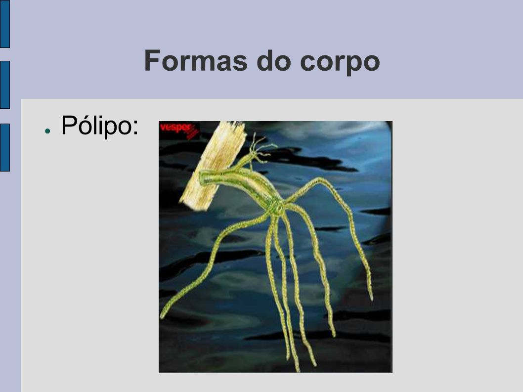 Formas do corpo Pólipo: