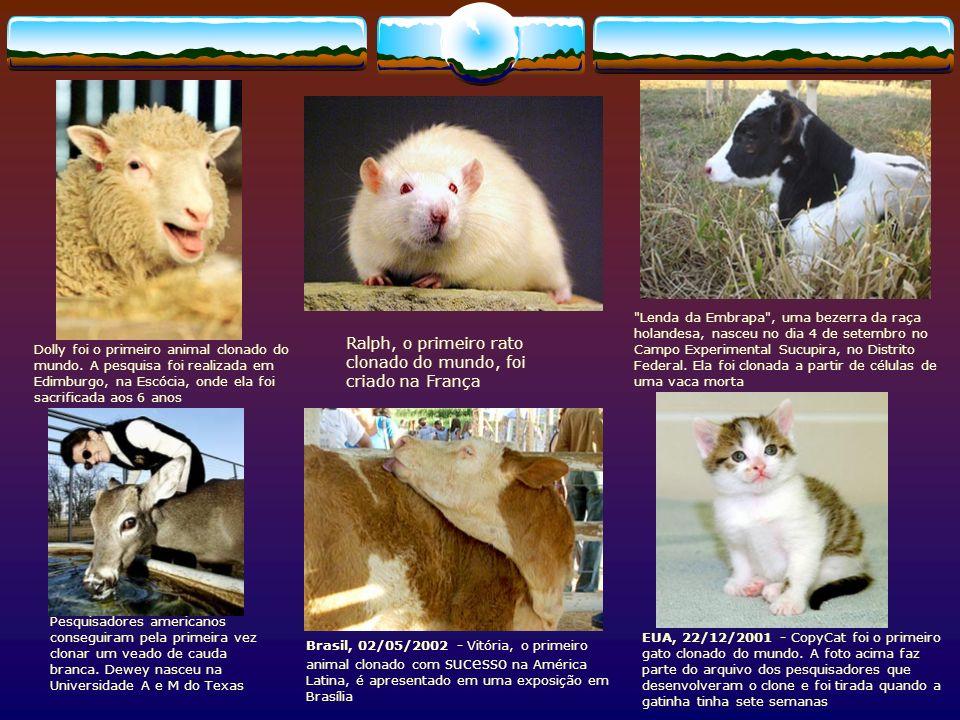Ralph, o primeiro rato clonado do mundo, foi criado na França