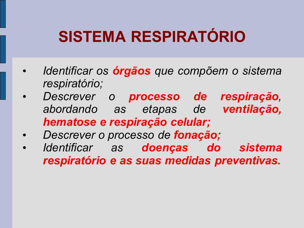 SISTEMA RESPIRATÓRIO Identificar os órgãos que compõem o sistema respiratório;