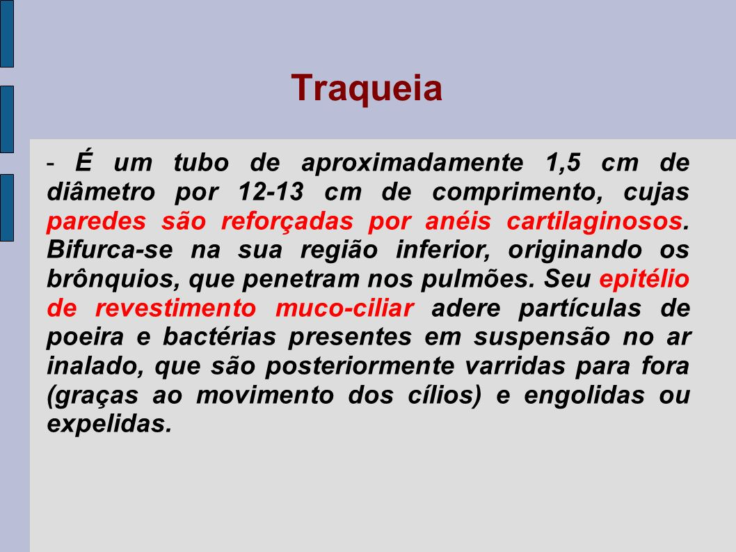 Traqueia