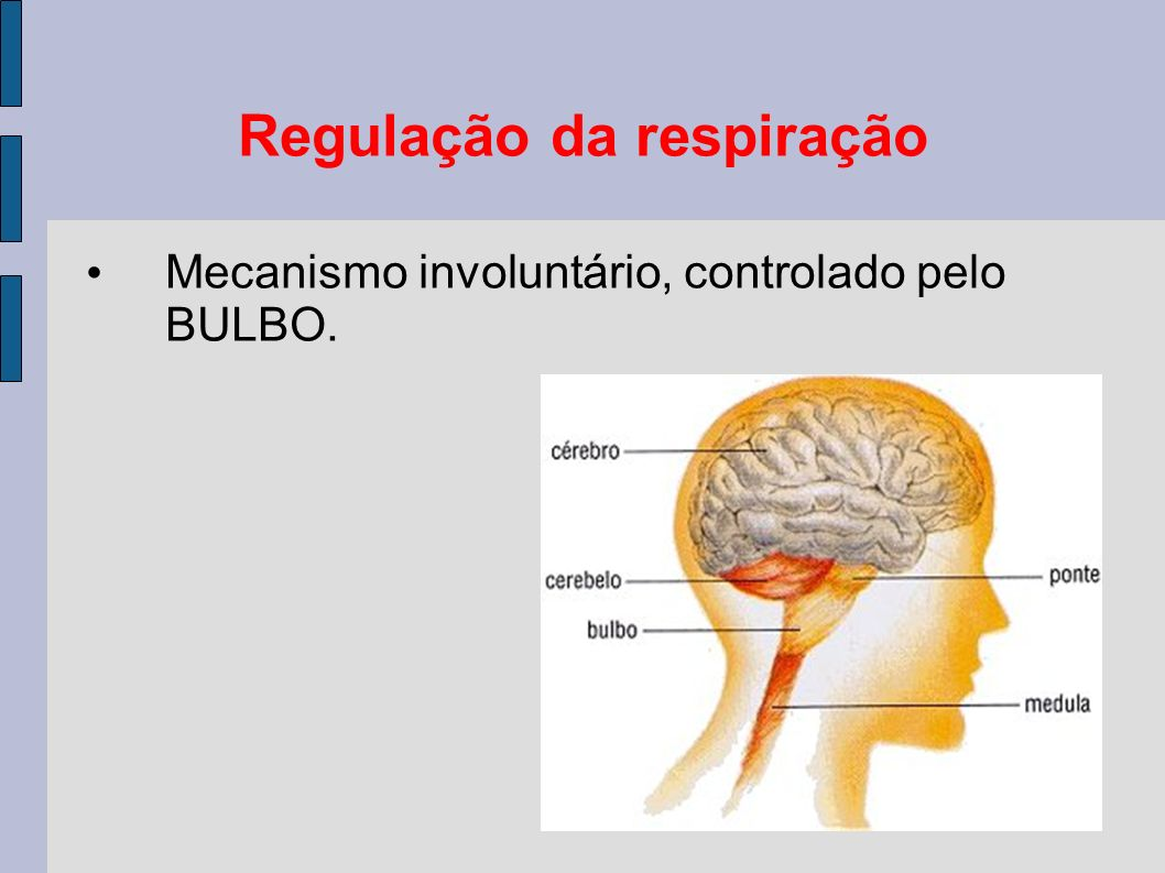 Regulação da respiração