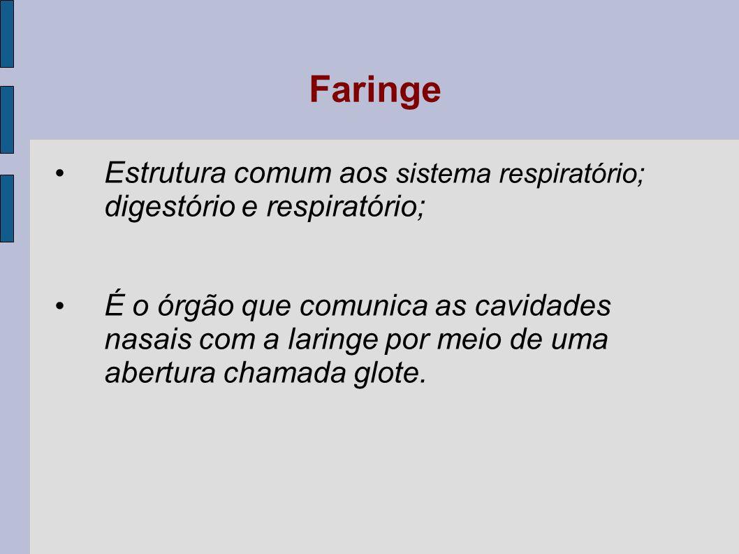 Faringe Estrutura comum aos sistema respiratório; digestório e respiratório;