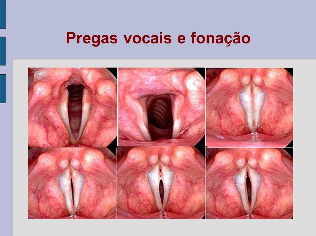 Pregas vocais e fonação