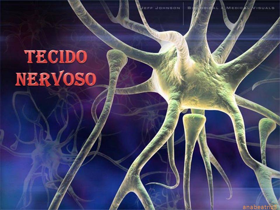 TECIDO NERVOSO TECIDO NERVOSO anabeatriz3