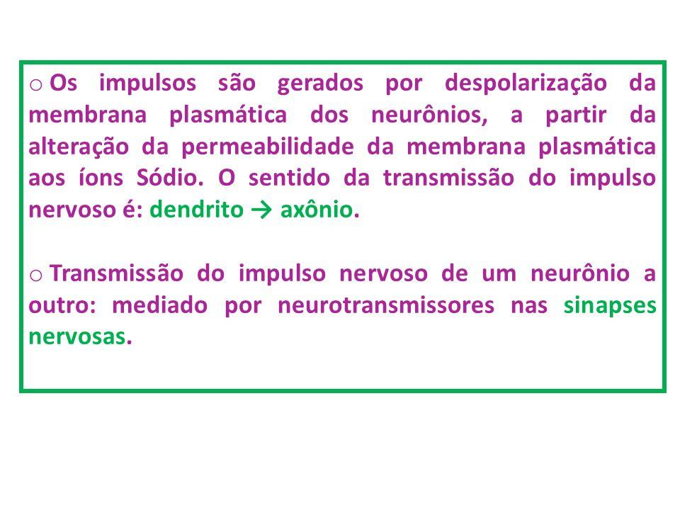 Os impulsos são gerados por despolarização da membrana plasmática dos neurônios, a partir da alteração da permeabilidade da membrana plasmática aos íons Sódio. O sentido da transmissão do impulso nervoso é: dendrito → axônio.