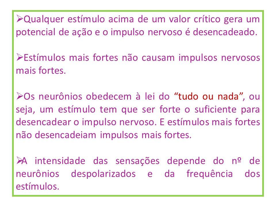 Qualquer estímulo acima de um valor crítico gera um potencial de ação e o impulso nervoso é desencadeado.