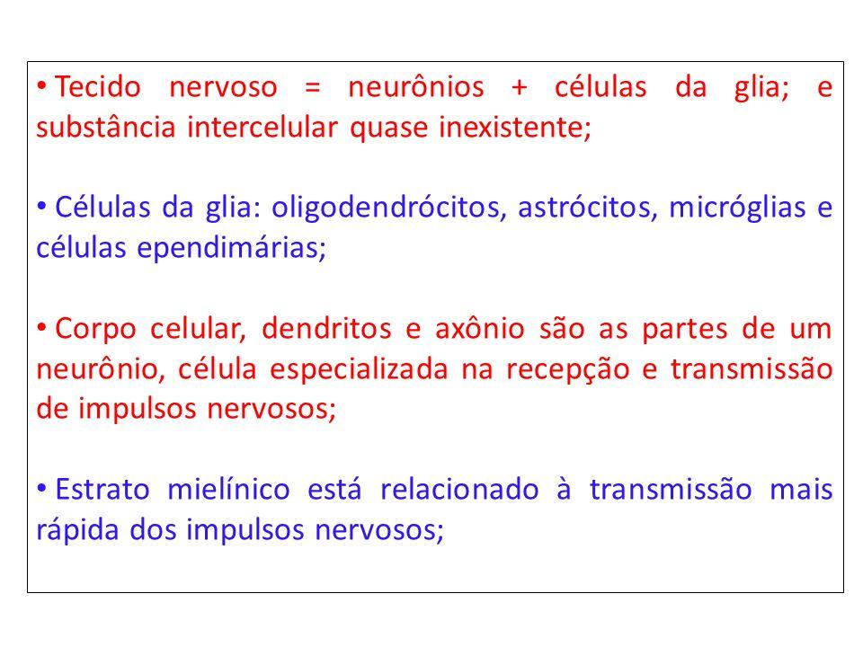 Tecido nervoso = neurônios + células da glia; e substância intercelular quase inexistente;