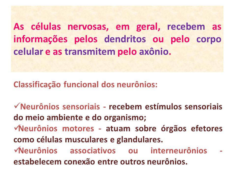 As células nervosas, em geral, recebem as informações pelos dendritos ou pelo corpo celular e as transmitem pelo axônio.