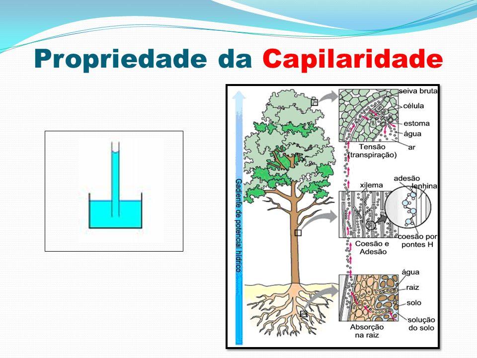 Propriedade da Capilaridade