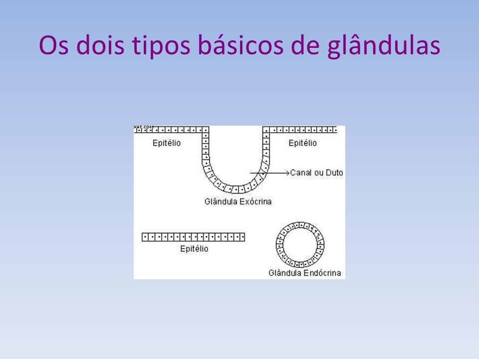 Os dois tipos básicos de glândulas