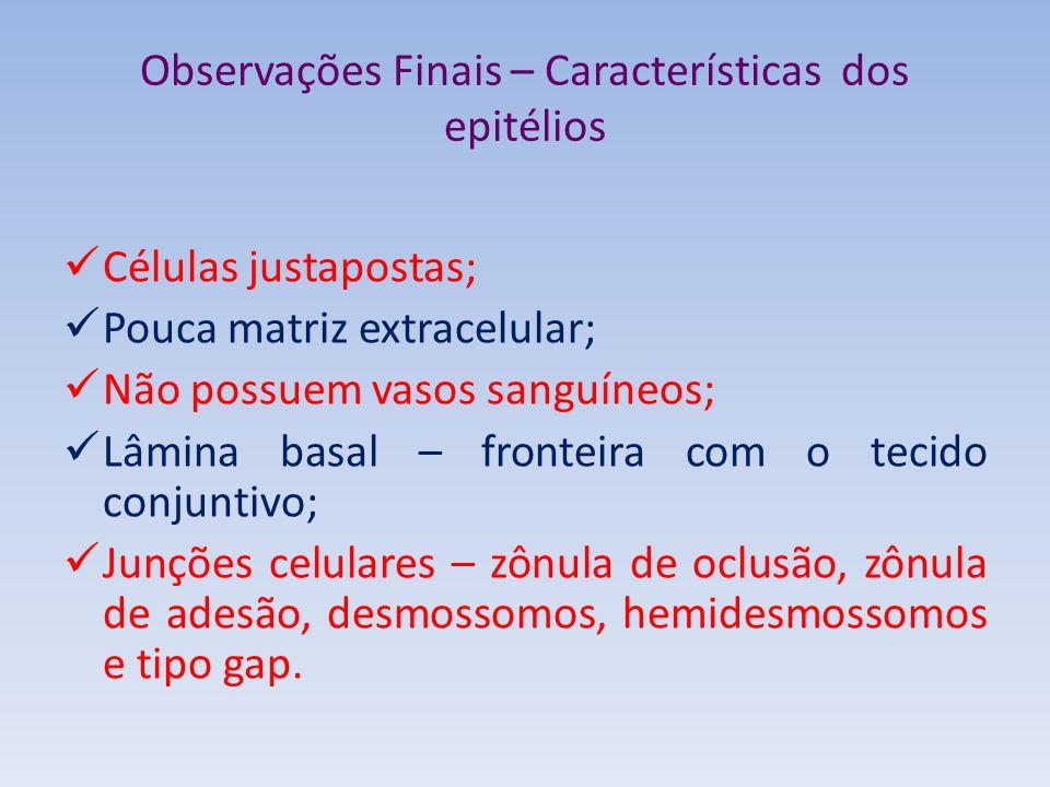 Observações Finais – Características dos epitélios