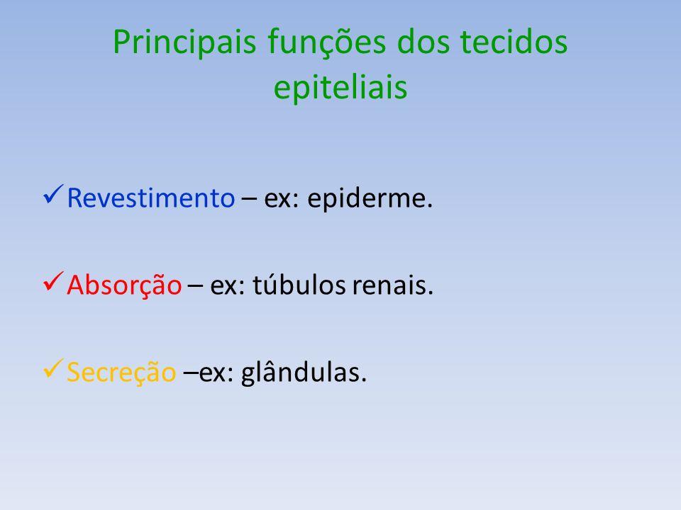 Principais funções dos tecidos epiteliais