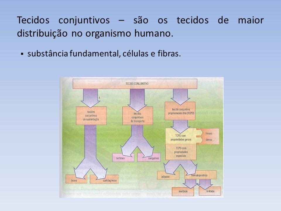 Tecidos conjuntivos – são os tecidos de maior distribuição no organismo humano.