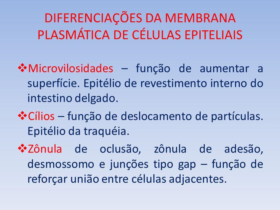 DIFERENCIAÇÕES DA MEMBRANA PLASMÁTICA DE CÉLULAS EPITELIAIS