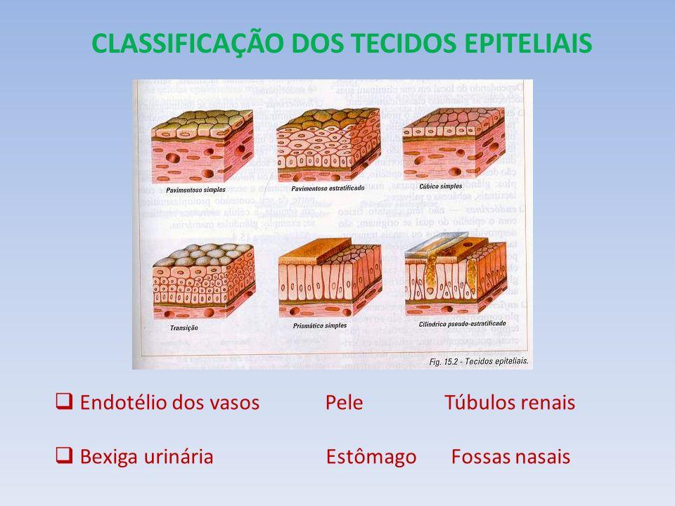 CLASSIFICAÇÃO DOS TECIDOS EPITELIAIS