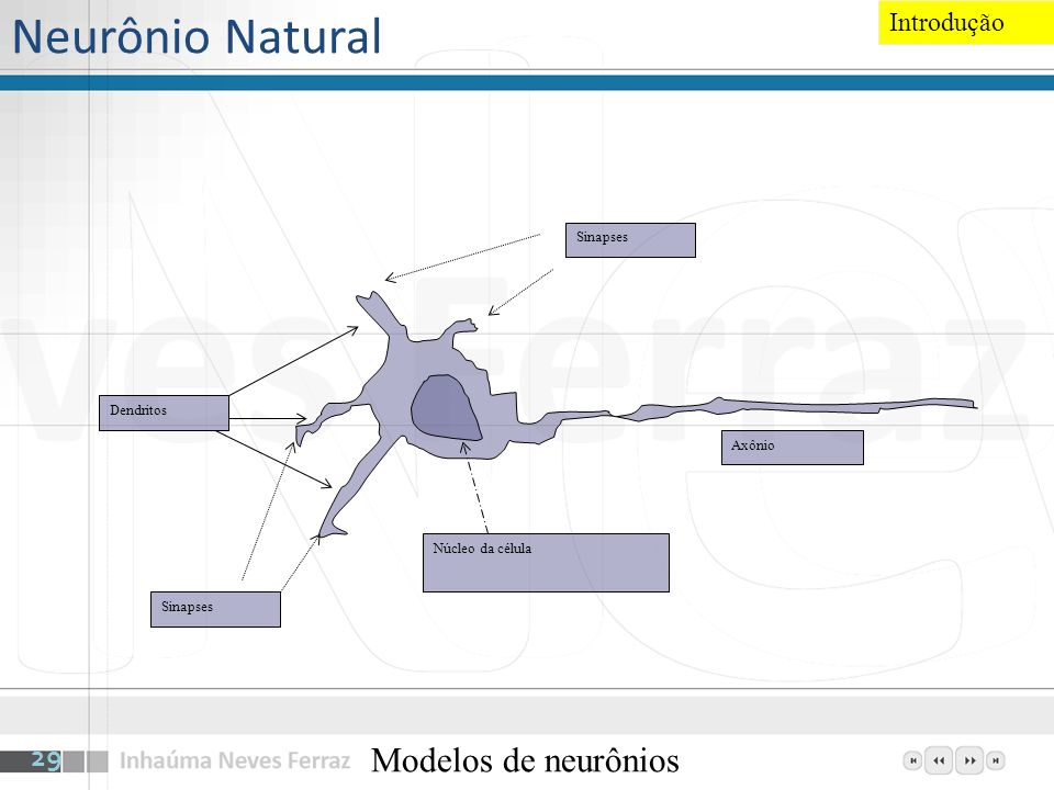 Neurônio Natural Modelos de neurônios Introdução Dendritos Axônio