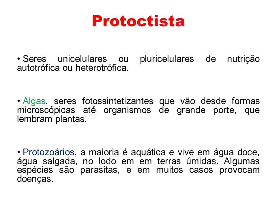 Protoctista Seres unicelulares ou pluricelulares de nutrição autotrófica ou heterotrófica.