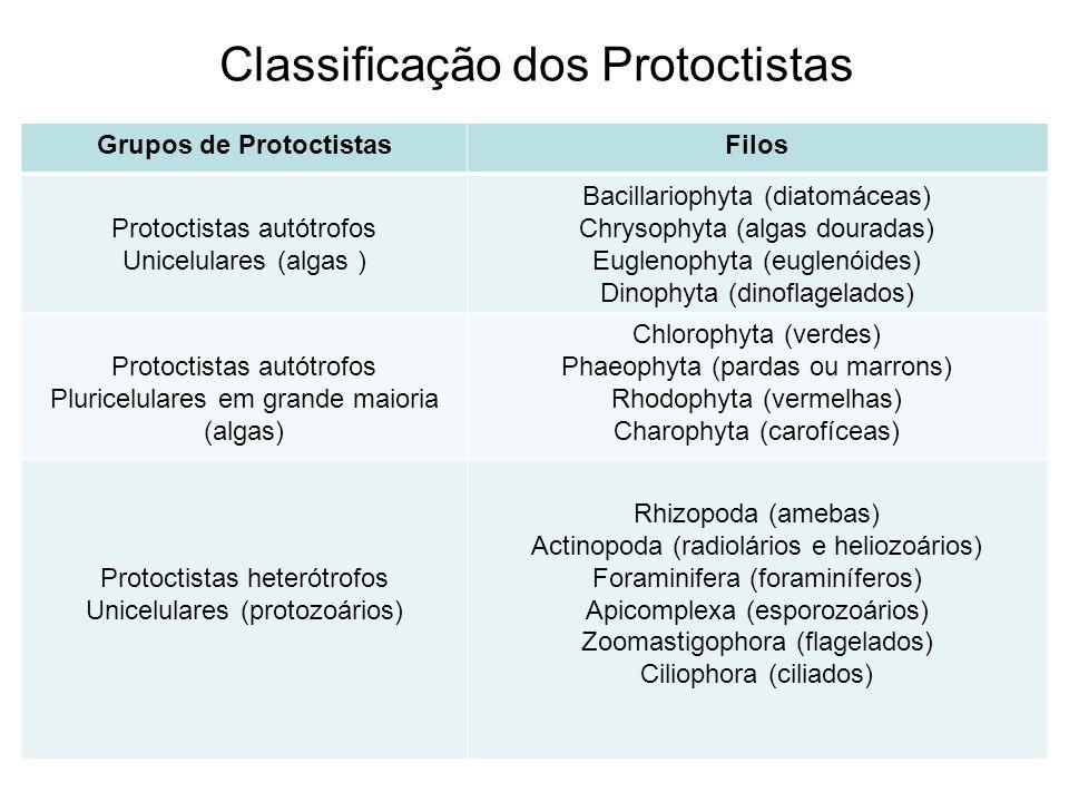 Classificação dos Protoctistas